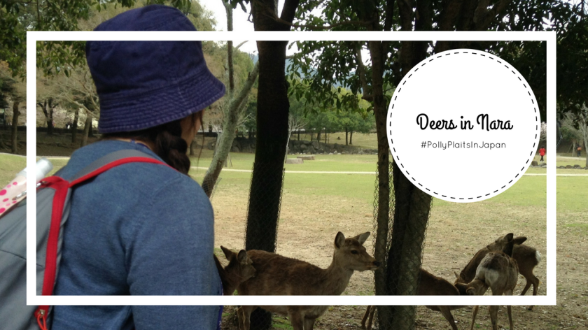 Nara Deer thumbnail